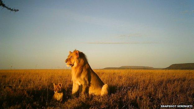 5270 Serengeti